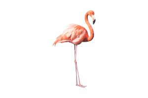Photograph of Cut out Flamingo prop 2D