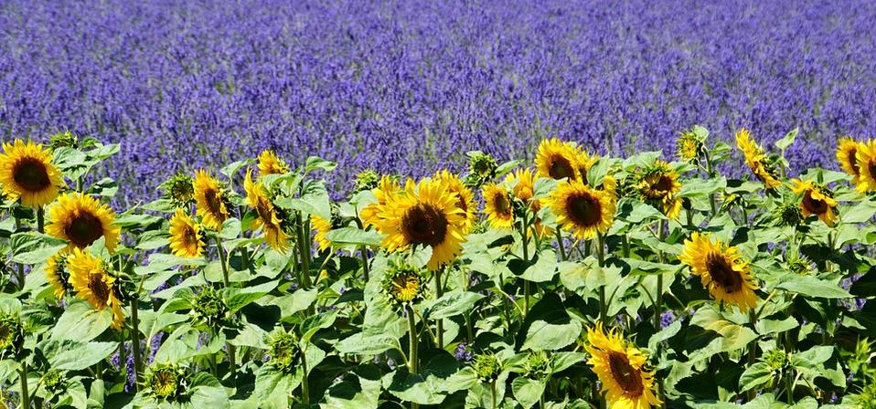 Vin, gastronomie et culture en Provence