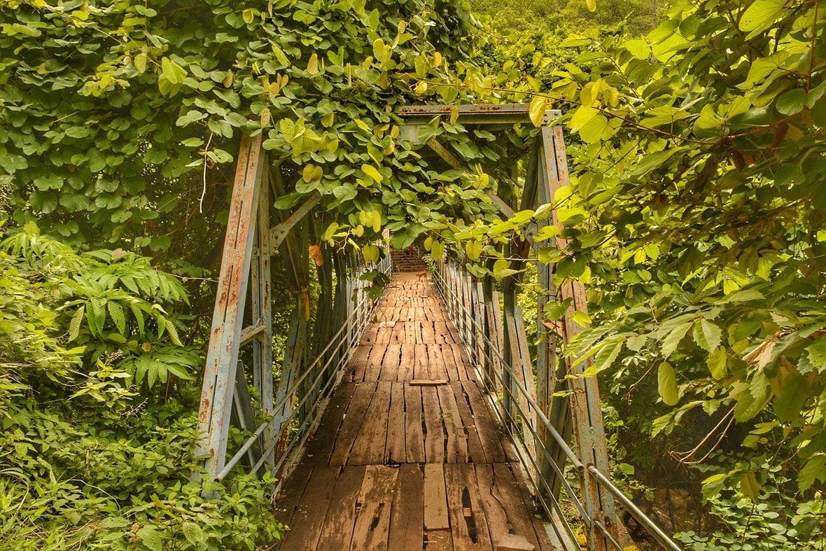 Forest naarsimhaswamy templeAndhra Pradesh