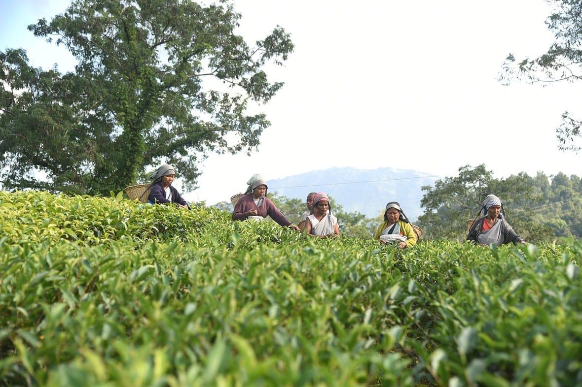 Garden in Meghalaya