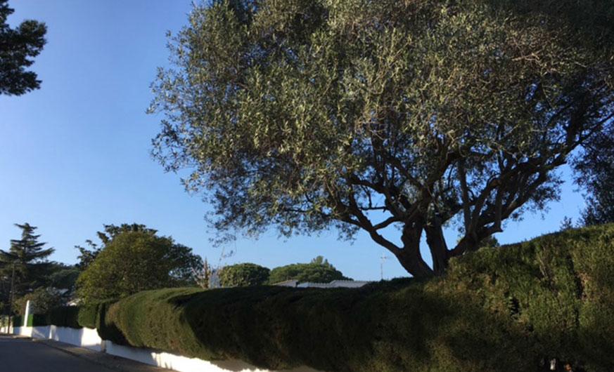 garden villa roadside
