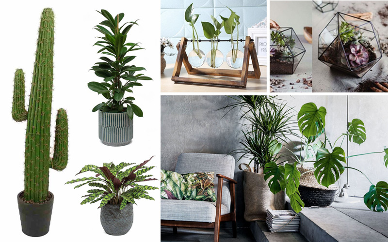 Statement Houseplants