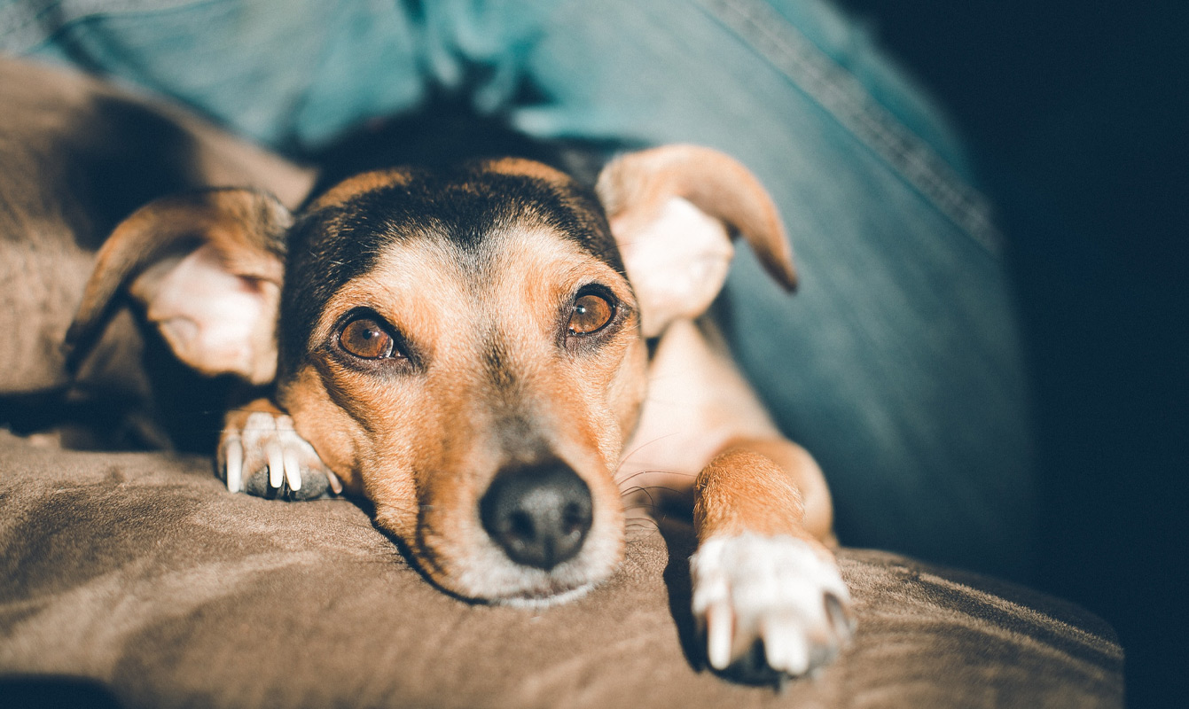 Pet Friendly Fabrics | A lot of life happens on your sofa