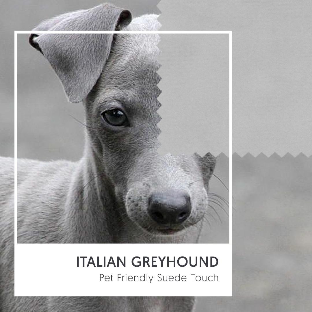 Light Grey Friendly Fabric