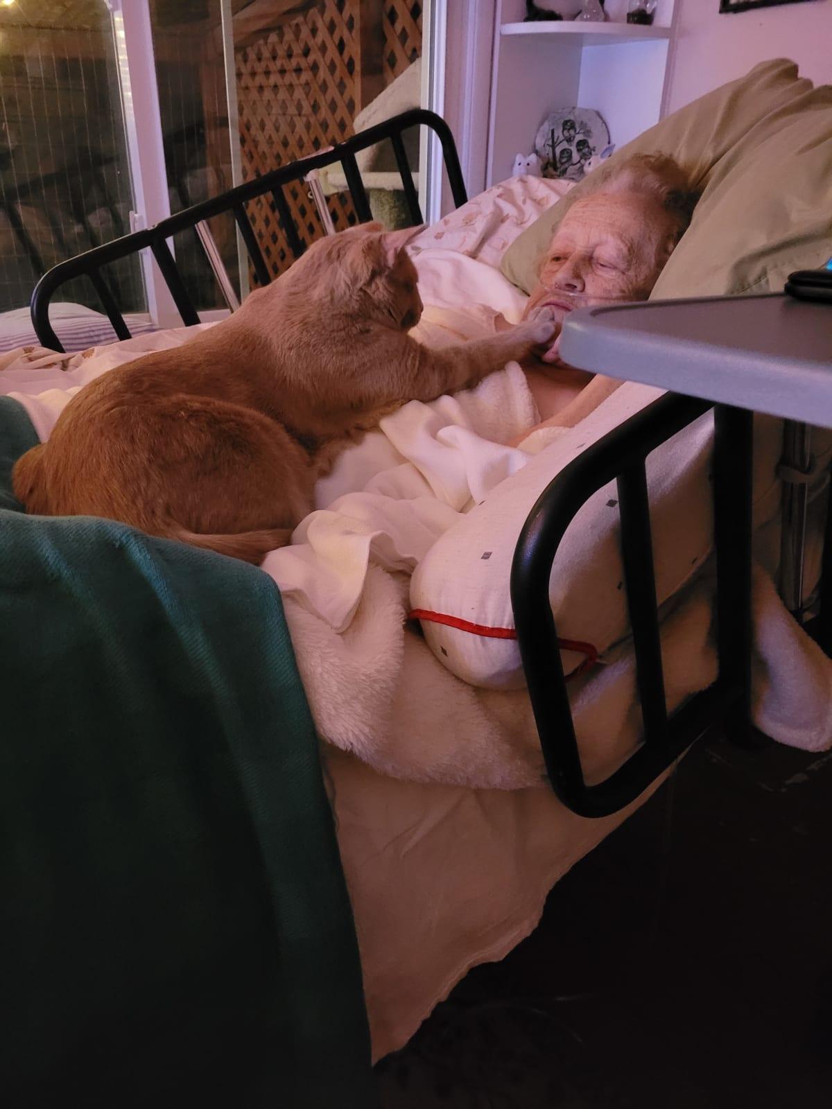 Milo my moms cat