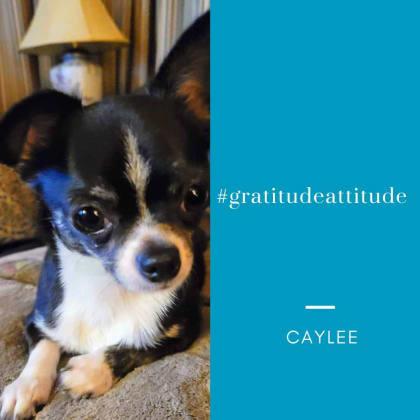 Caylee  #gratitudeattitude