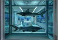 Sharks in tank within games room, Damien Hurst artwork