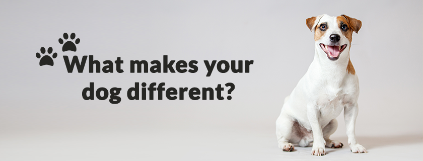 What makes your dog different?