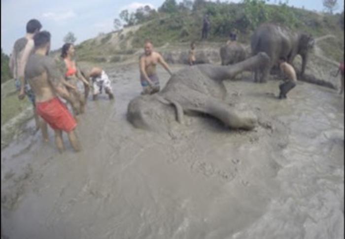 Chiangmai-Mud flying  in Elephant Caring in Chiang Mai, Chiang Mai
