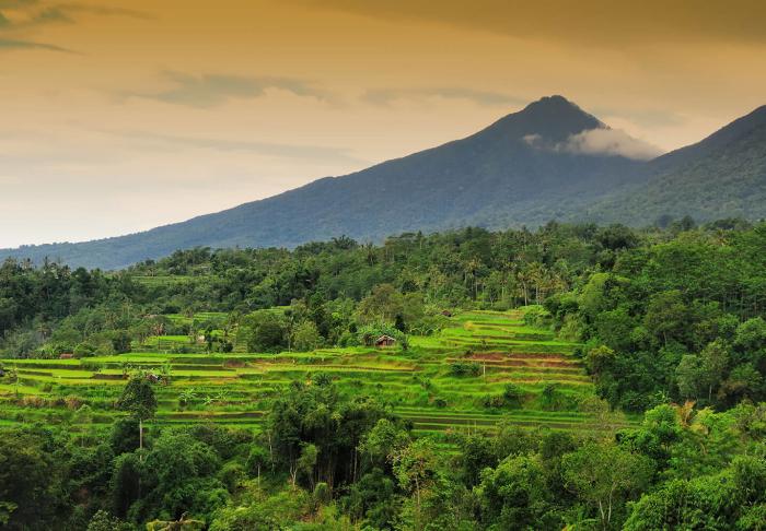 Jatiluwih Rice Terraces in Jatiluwih Rice Terraces, Bali