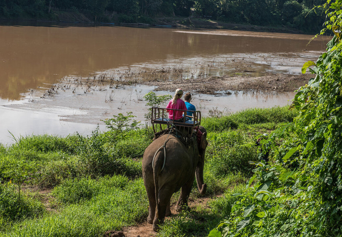 Elephant Riding in Elephant Riding, Luang Prabang