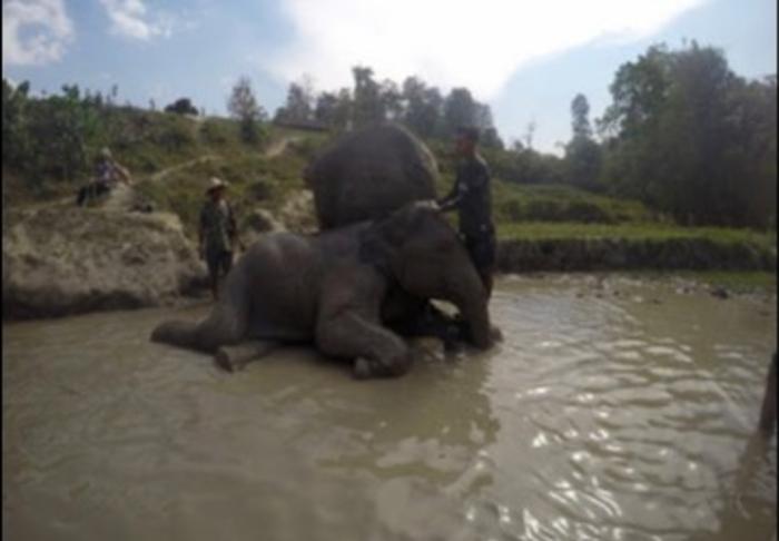 Chiangmai in Elephant Caring in Chiang Mai, Chiang Mai