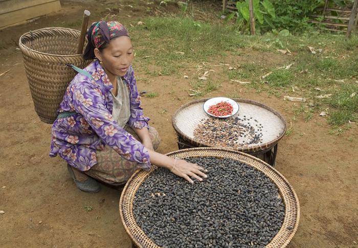 The Kamu and Hmong Village in The Kamu and Hmong Village, Luang Prabang