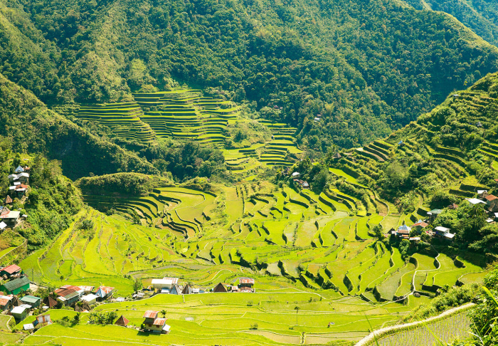 Banaue Rice Terraces in Banaue Rice Terraces, Manila