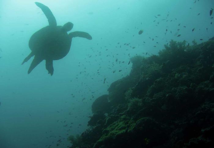 Turtle Islands National Park in Turtle Islands National Park, Kota Kinabalu