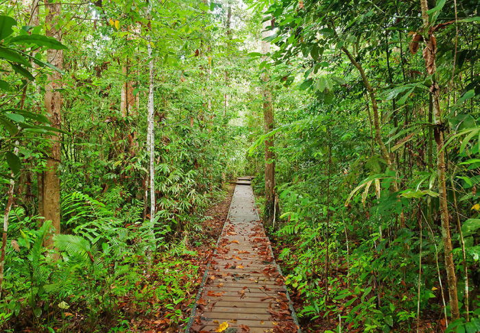 Taman Negara National Park in Taman Negara National Park, Kuala Lumpur