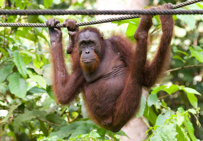 Tabin Wildlife Reserve in Tabin Wildlife Reserve, Kota Kinabalu