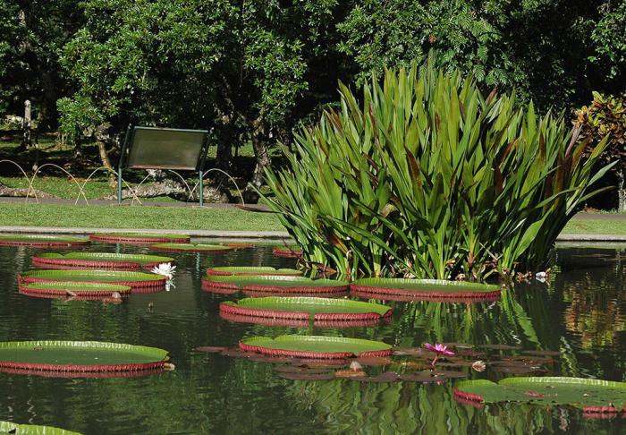 Bogor Botanical Garden in Bogor Botanical Garden, Jakarta