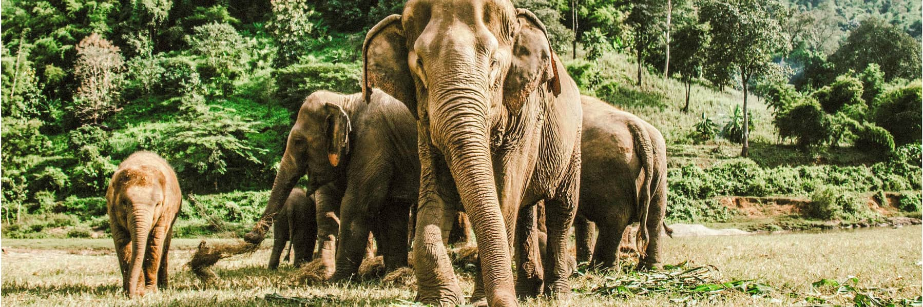 Elephant Jungle Sanctuary Chiang Mai – Half Day gallery