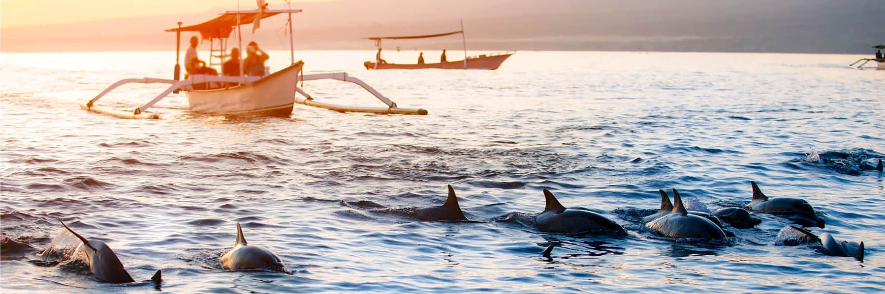 Bali Dolphin Watching & Sunrise at Lovina Beach – Full Day gallery