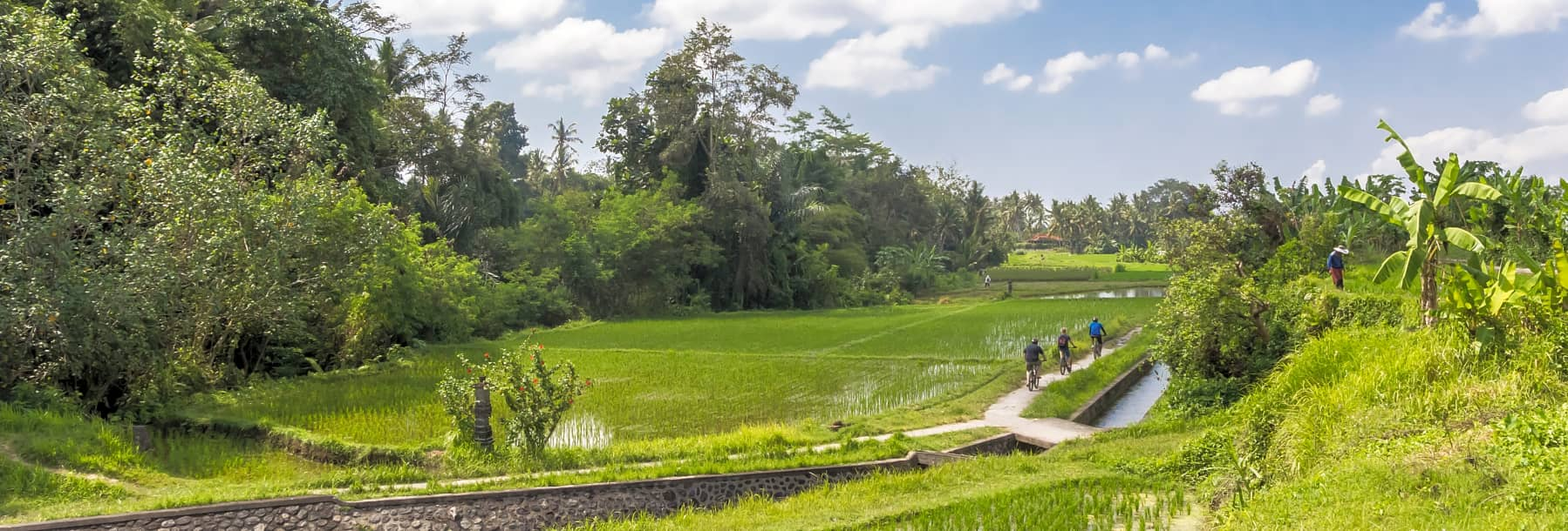 Jatiluwih Rice Terraces E Bike Tour (Bali) – Half Day gallery