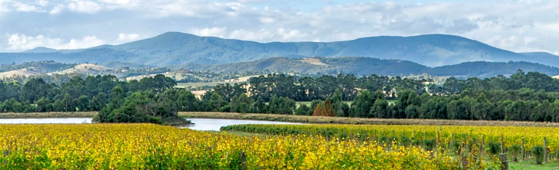 Yarra Valley Wineries & Killara Estate Tour – Full Day gallery