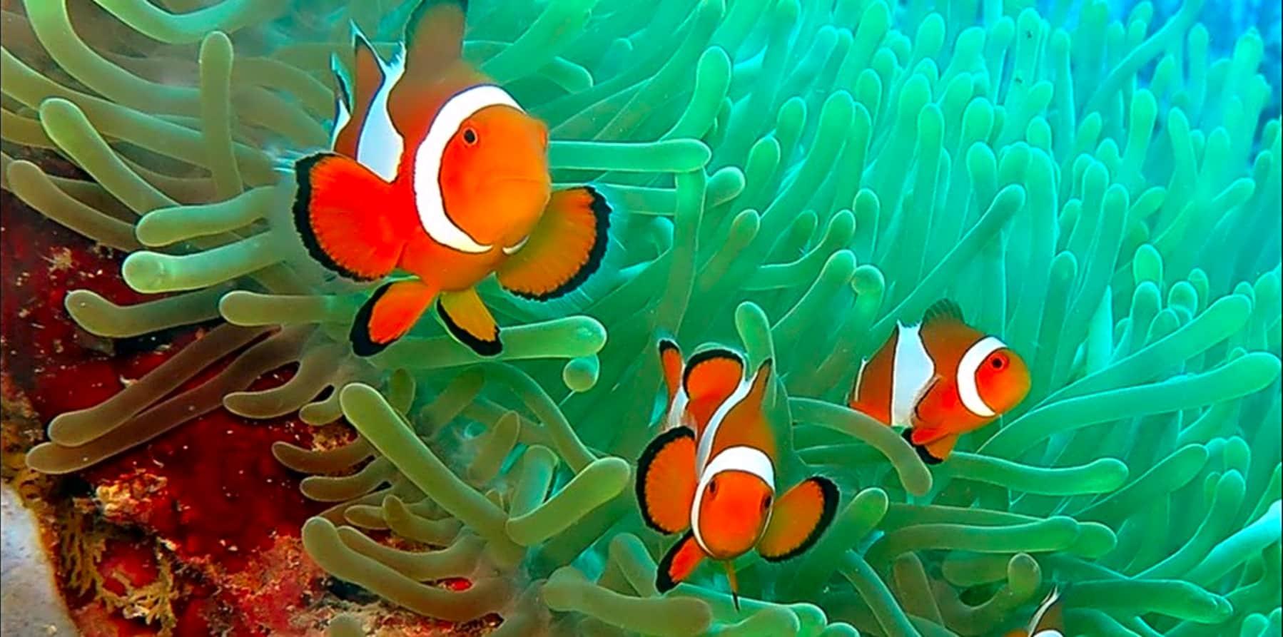Enjoy a Day of Free Diving in El Nido gallery