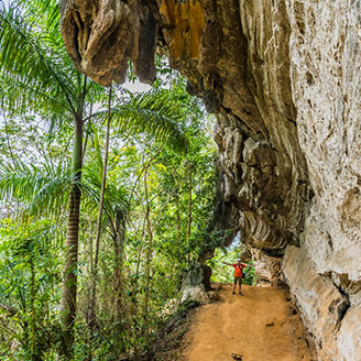 Cuban Jungle Path