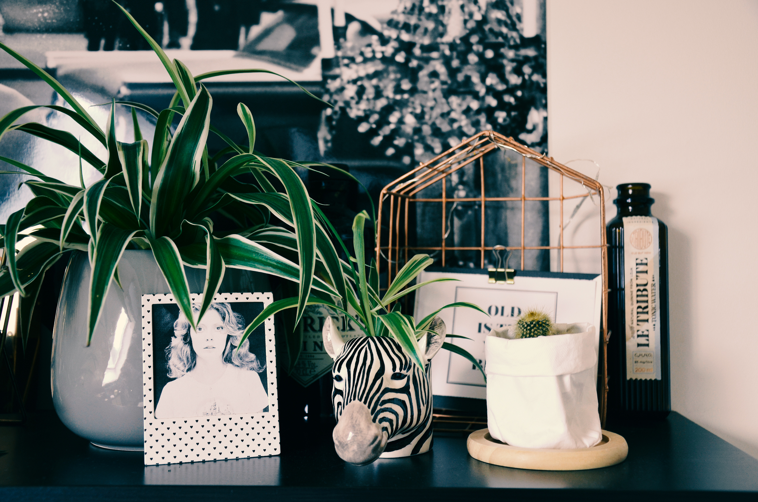 Zebra head next to a spider plant