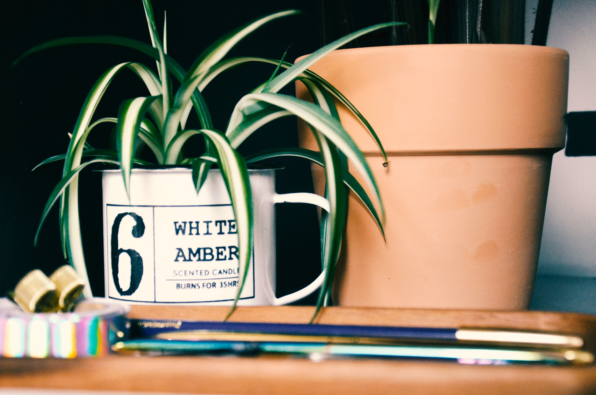 Desk Spider plant in a previously candle coffee mug