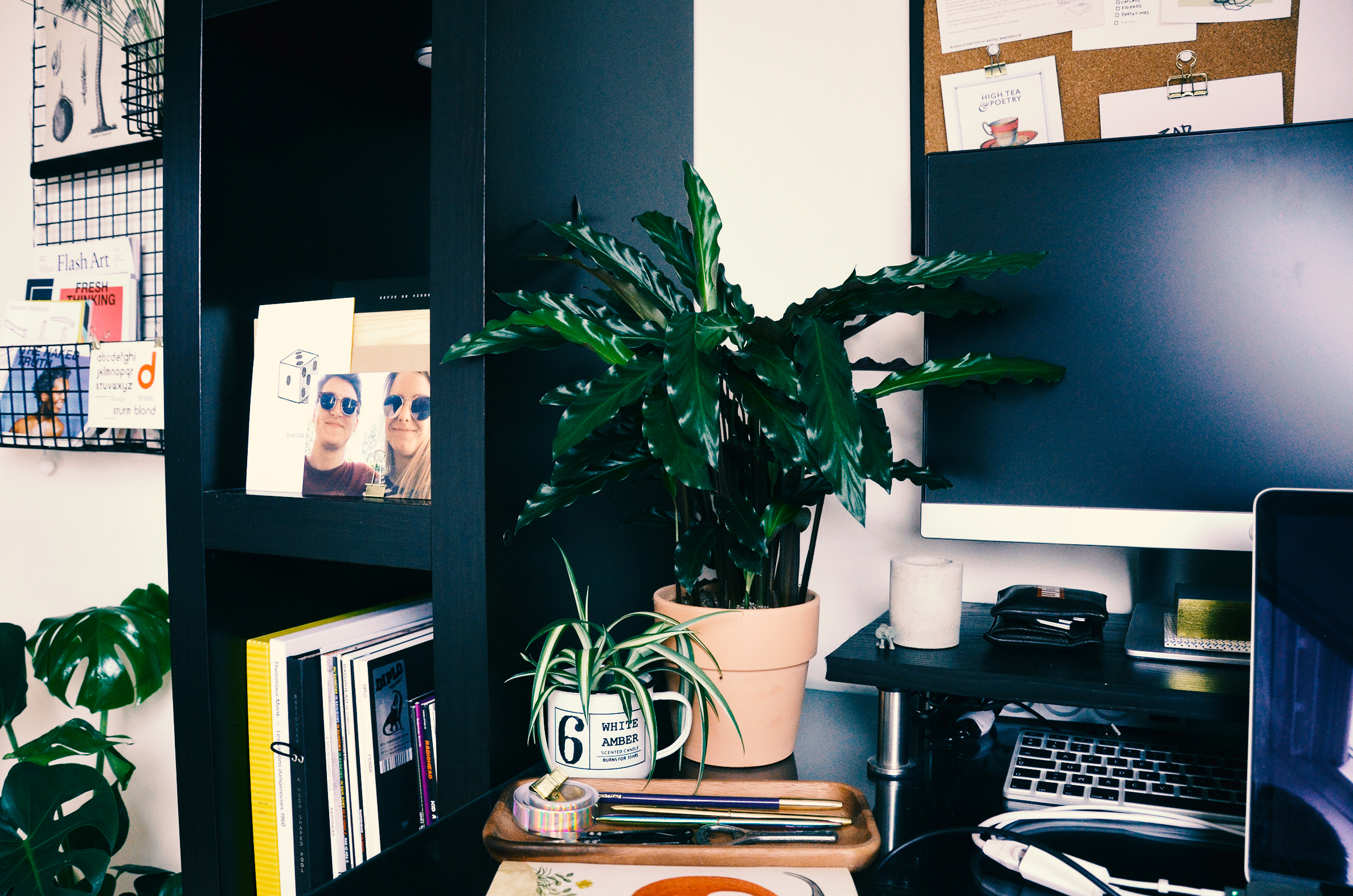 Wide shot of my Calathea on my desk