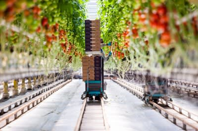 Geothermal key to competitiveness of Dutch greenhouse sector
