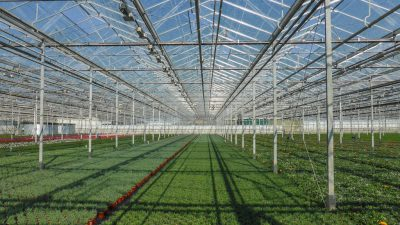 Geothermal key element of sustainable choices for greenhouse horticulture