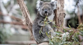 Great Southern Touring Route: Nature & Wildlife