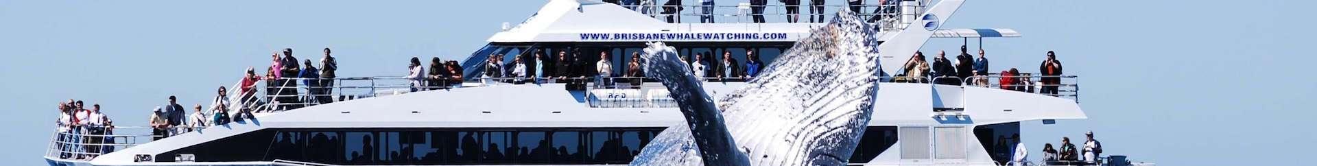 Brisbane Whale Watching tours
