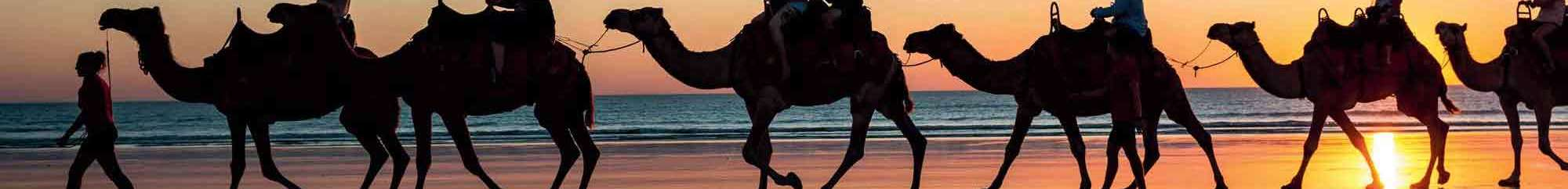broome beach sunset camels