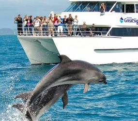 Fullers Dolphin Cruise