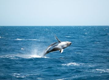 Get inspired with Britz, Whale Watching Queensland