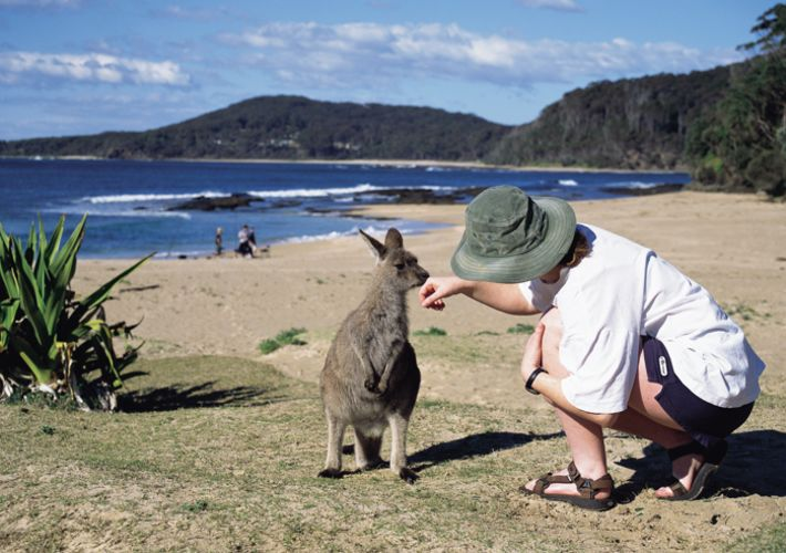 australian-wildlife-encounters