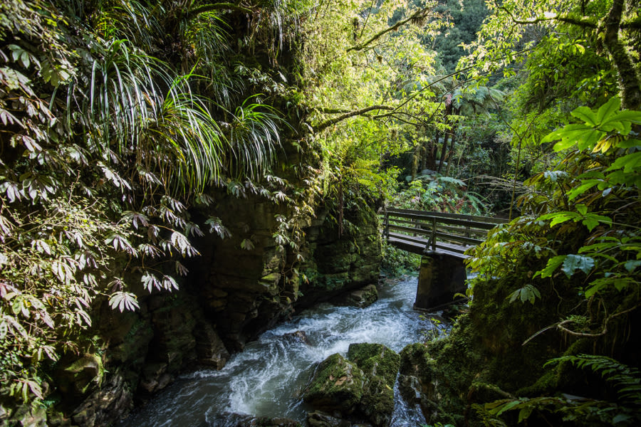 Top 3 Waitomo Short Walks