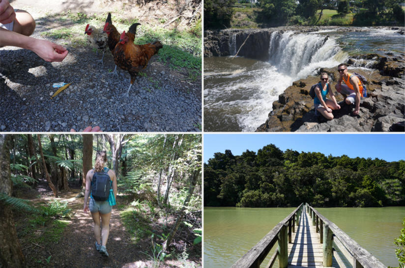 picture-perfect-paihia-kiwi-experience-walks