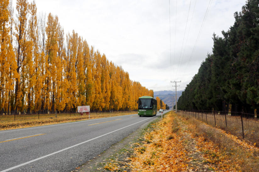 kiwi experience bus in autumn