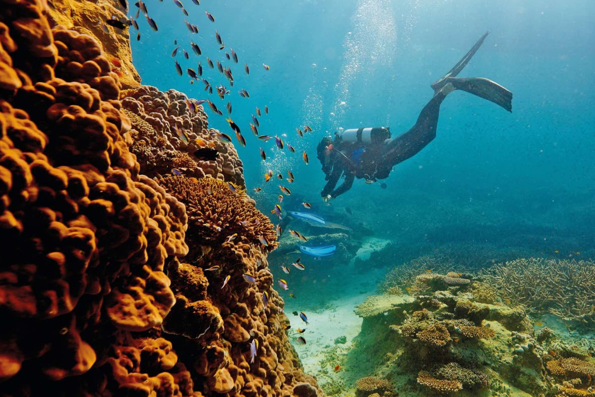 The Great Barrier Reef Diving