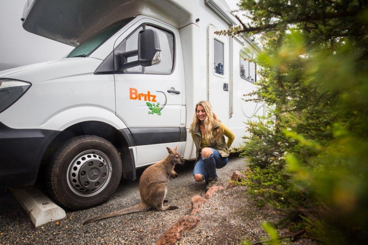 britz campervans meeting the local wildlife
