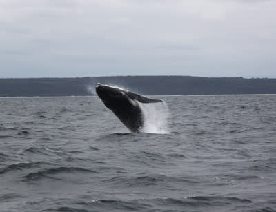 How to have a whale of a time and manage customer expectations in tourism