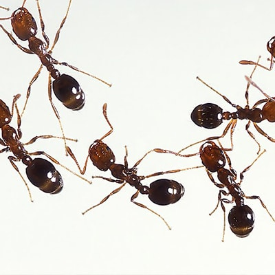 Ants as a metaphor for social media marketing