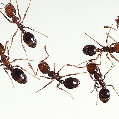 Ants as a metaphor for social media marketing
