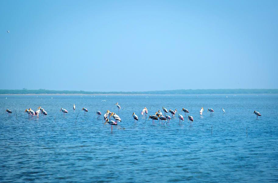 Pulicat Lake Boating Image