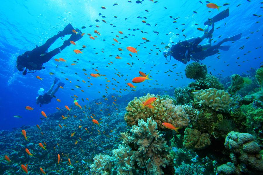Coral Island Phuket Snorkeling Image