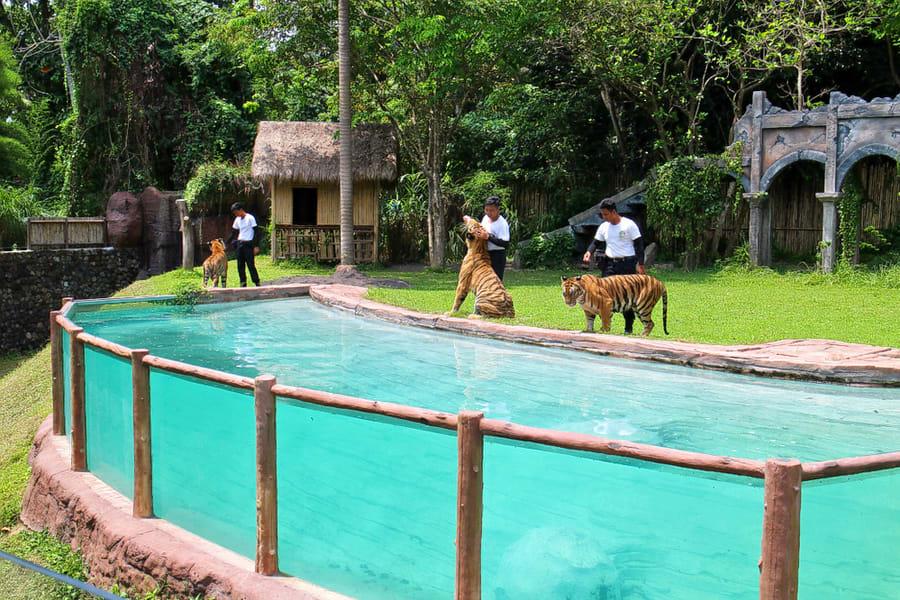 Bali Safari And Marine Park Image